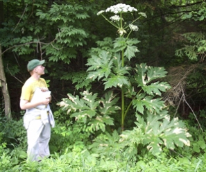 Giant HogWeed Hazard